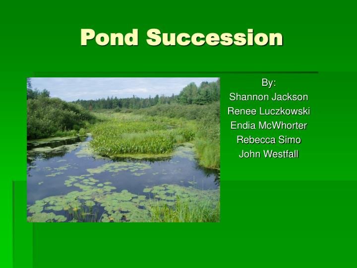 pond succession n.