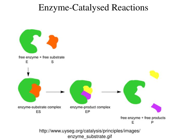 Enzyme-Catalysed Reactions