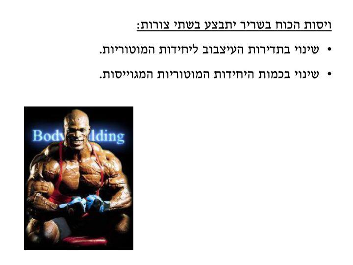 ויסות הכוח בשריר יתבצע בשתי צורות: