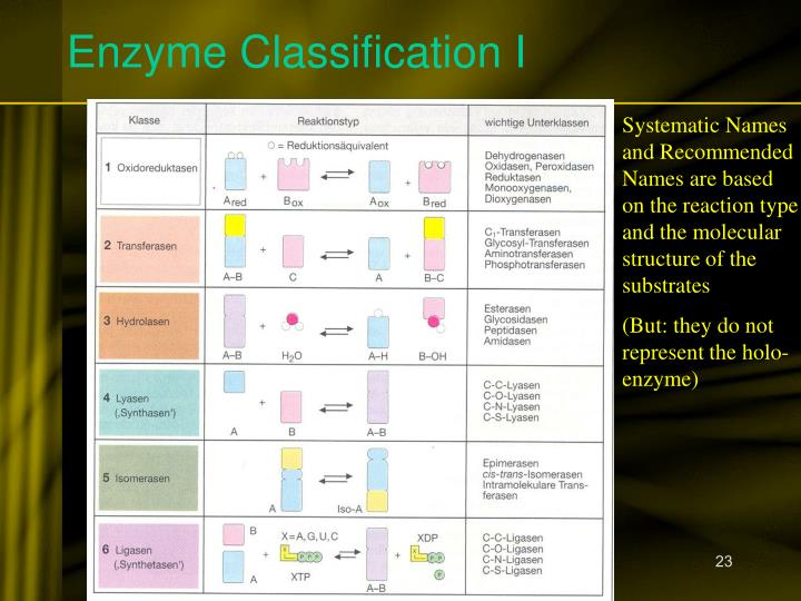 Enzyme Classification I