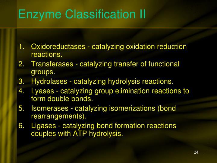 Enzyme Classification II