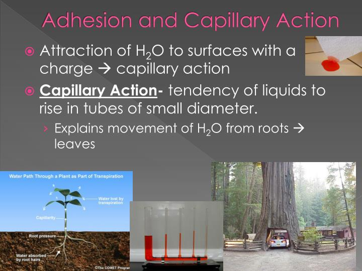 Adhesion and Capillary Action