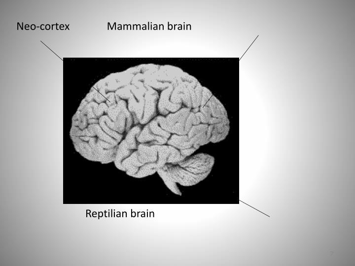Neo-cortex              Mammalian brain