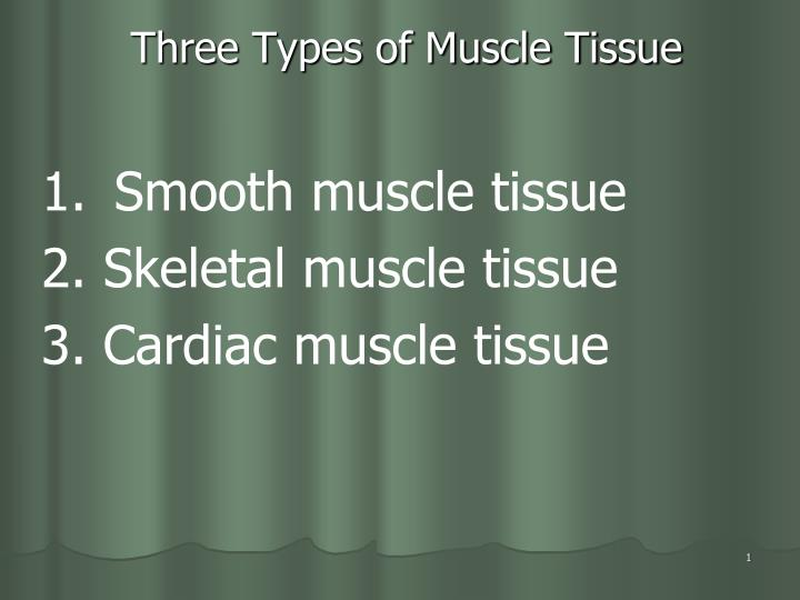 three types of muscle tissue n.
