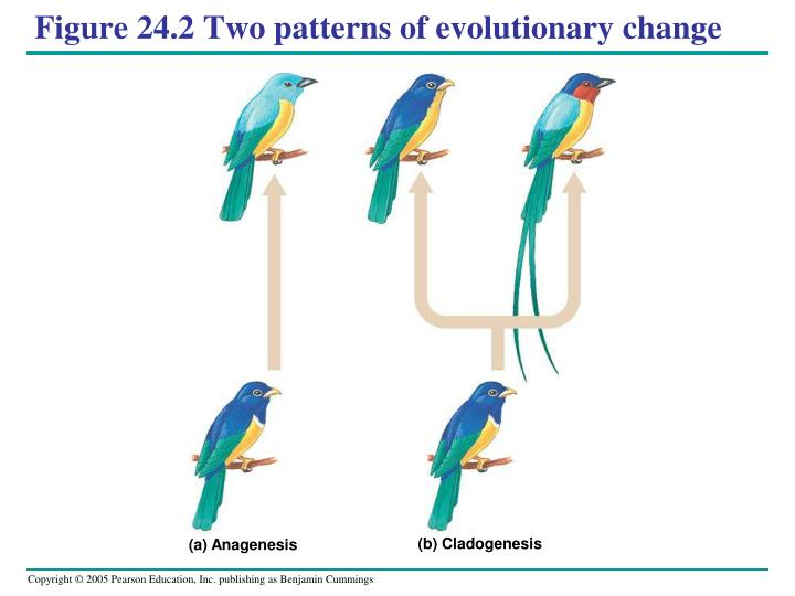 Figure 24 2 two patterns of evolutionary change