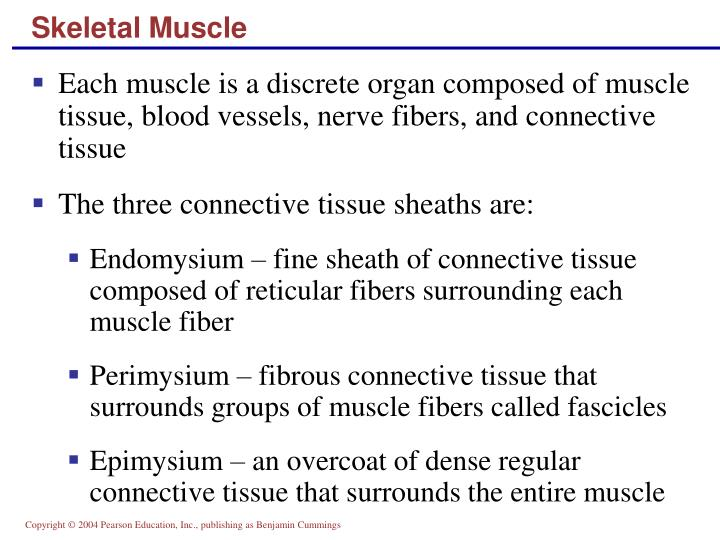 Skeletal Muscle