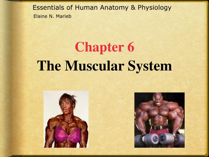 PPT Essentials Of Human Anatomy Physiology PowerPoint