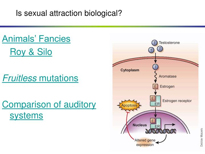 Is sexual attraction biological?