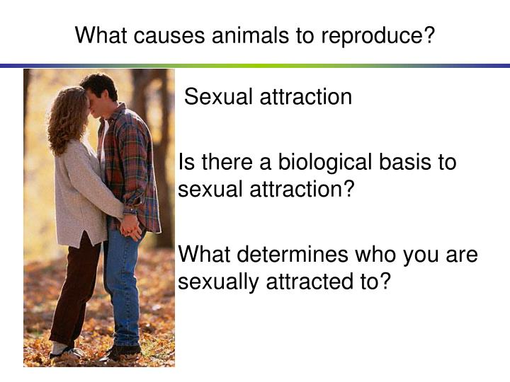 What causes animals to reproduce?