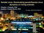 sendai virus illuminating parainfluenza virus dynamics in living animals1