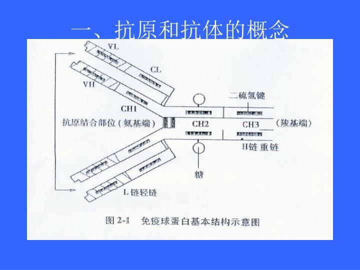 一、抗原和抗体的概念