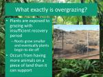 what exactly is overgrazing