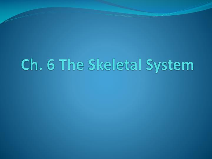 ch 6 the skeletal system n.