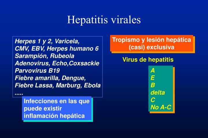 hepatitis virales n.