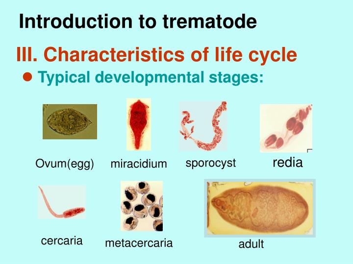 Introduction to trematode