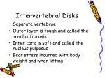 intervertebral disks