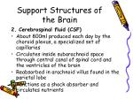 support structures of the brain1