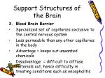 support structures of the brain2