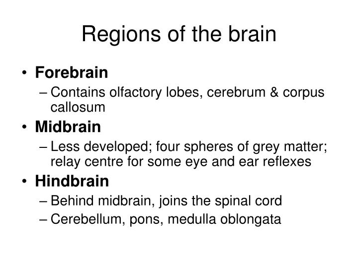 Regions of the brain