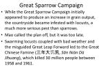 great sparrow campaign5