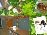 forestry herbarium