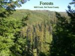 forests mill creek del norte county