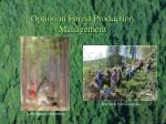 option in forest production management