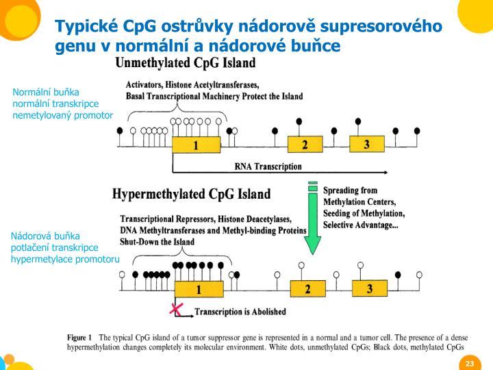 Typické CpG ostrůvky nádorově supresorového genu v normální a nádorové buňce