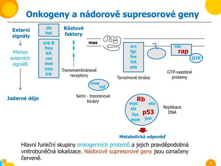 Onkogeny a nádorově supresorové geny
