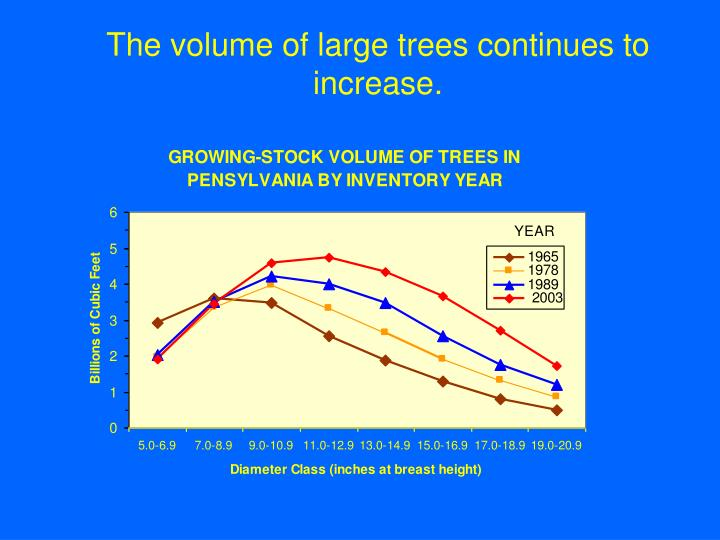 The volume of large trees continues to increase.