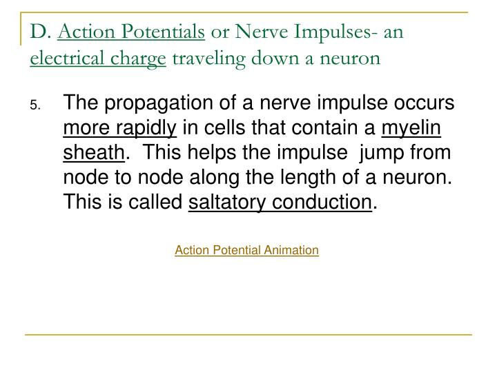 the action potential is an impulse of electrical activity essay Chapter 11: fundamentals of the nervous system and electrical impulses an action potential in the axon of a neuron is a nerve impulse k action potential.