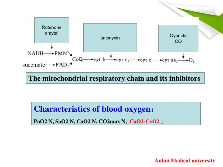 The mitochondrial respiratory chain and its inhibitors