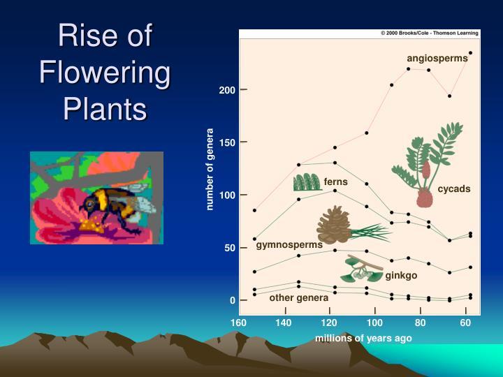 Rise of Flowering Plants