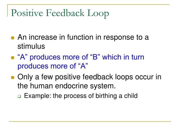 endocrine system feedback loop