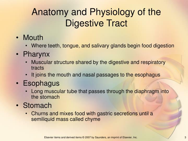 Anatomy and physiology of the digestive tract