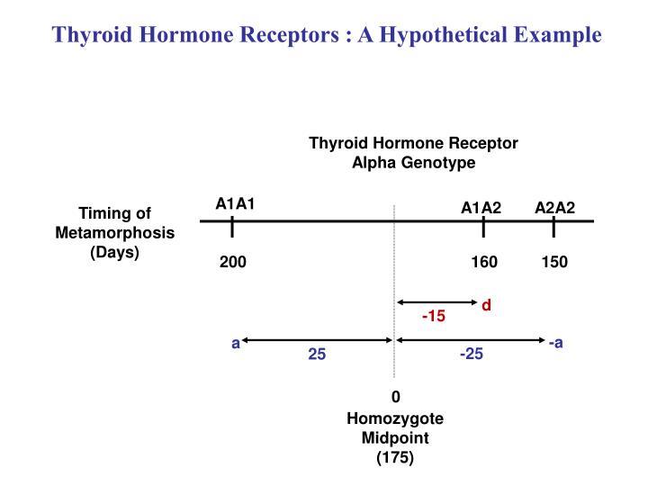Thyroid Hormone Receptors : A Hypothetical Example