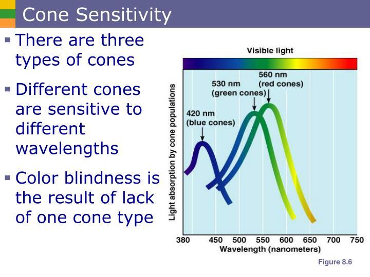Cone Sensitivity