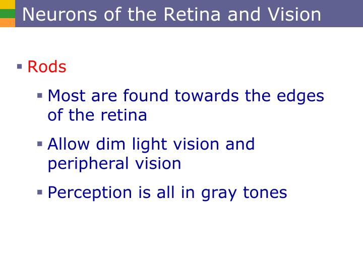 Neurons of the Retina and Vision