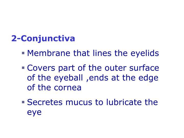 2-Conjunctiva