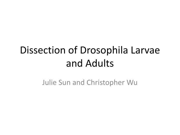 dissection of drosophila larvae and adults n.