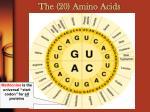 the 20 amino acids