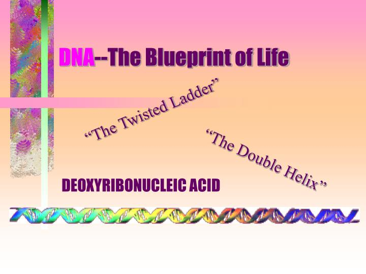 Ppt dna the blueprint of life powerpoint presentation id6060136 dna the blueprint of life malvernweather