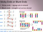 sticky ends or blunt ends