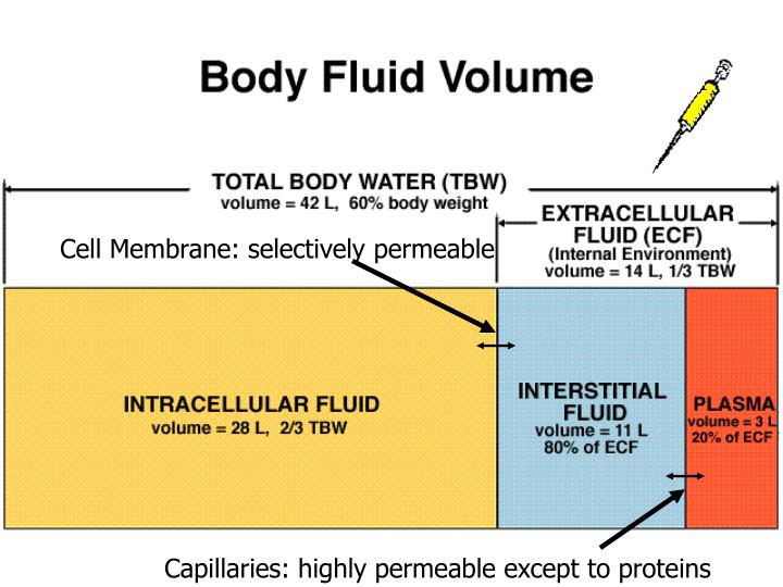 Cell Membrane: selectively permeable
