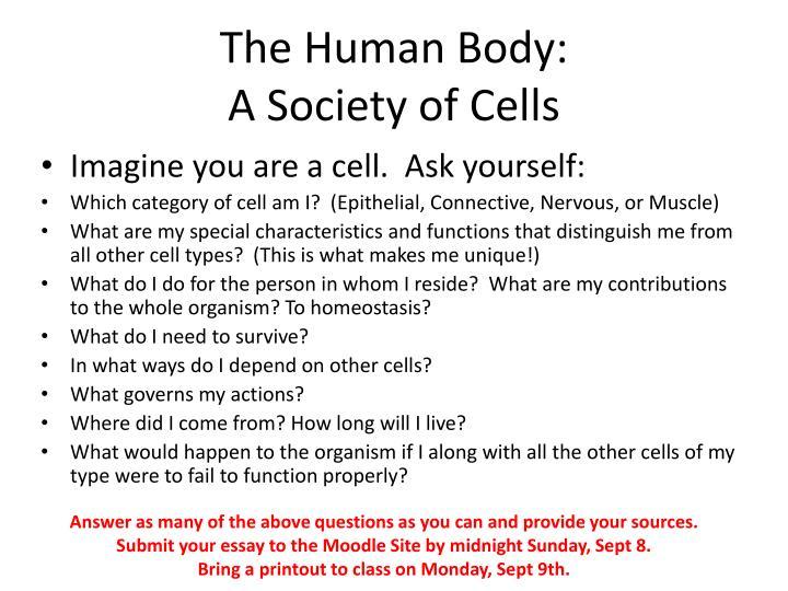 The Human Body: