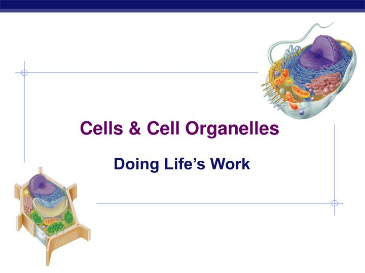 cells cell organelles n.