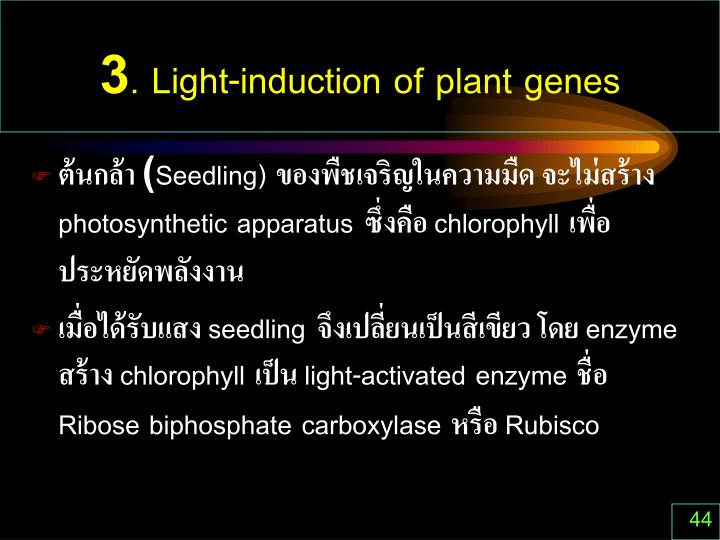 3. Light-induction of plant genes