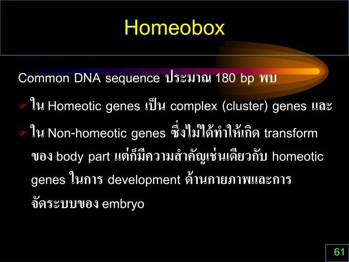 Homeobox