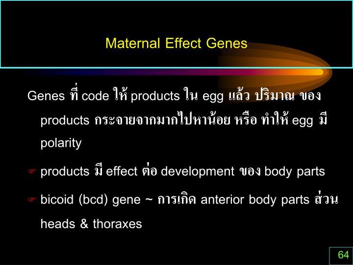 Maternal Effect Genes