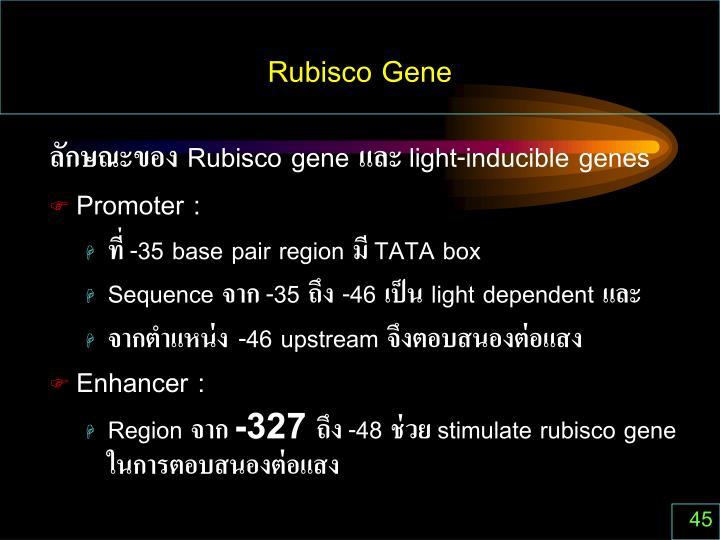 Rubisco Gene